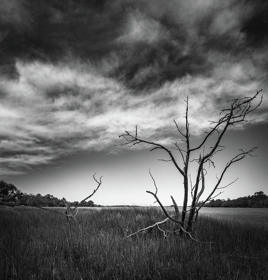 Old Remains  by Donnie Whitaker