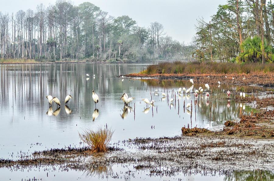 Old Rice Pond by Scott Hansen