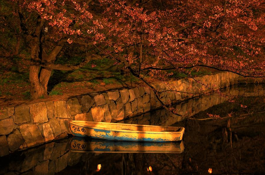 Old Rowing Boat Floats Under The Cherry Photograph by Mark Montgomery
