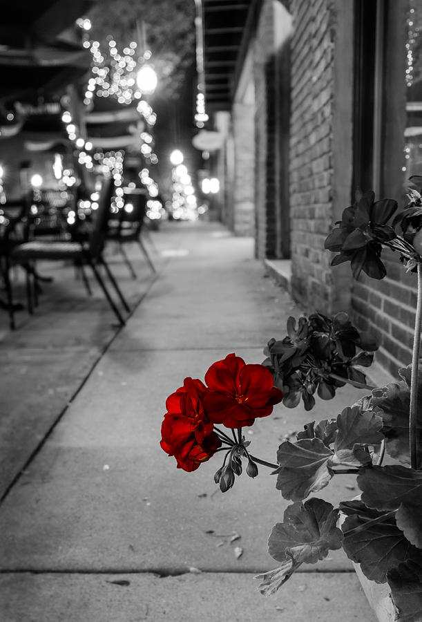 Old Town Flowers Photograph