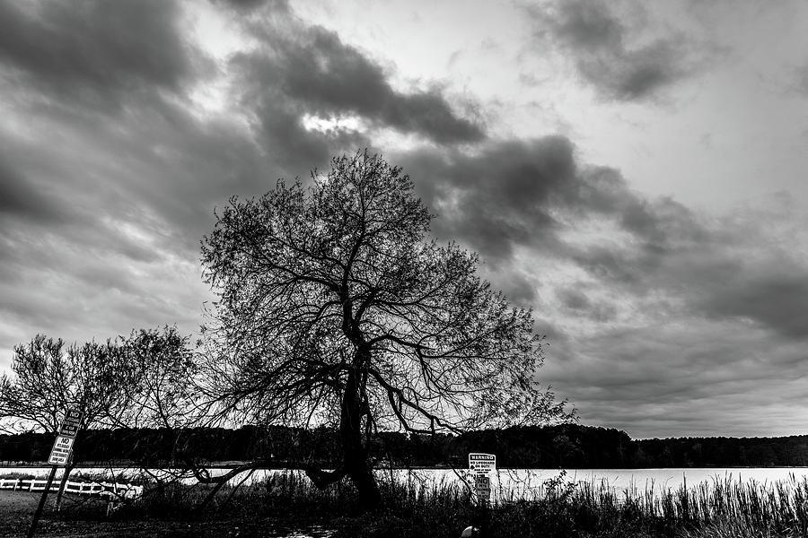 Old Tree II by James L Bartlett