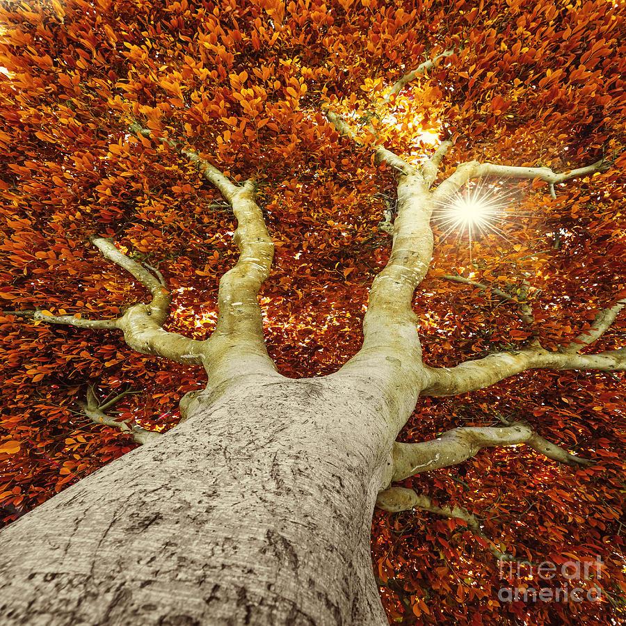 Big Photograph - Old Tree In Autumn by Kuttelvaserova Stuchelova