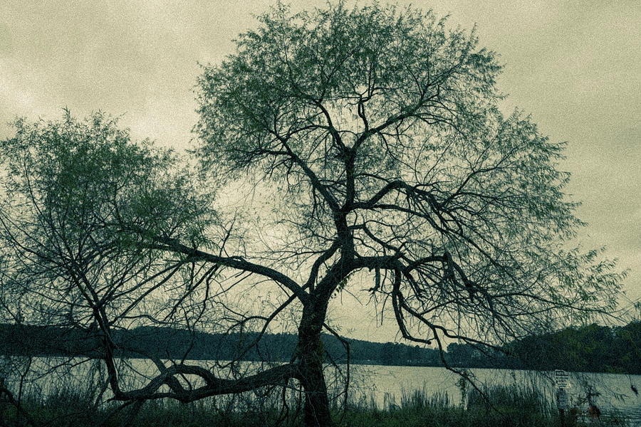 Old Tree by James L Bartlett