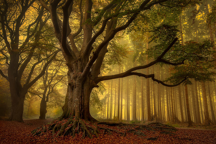 Trees Photograph - Old Tree...... by Piet Haaksma
