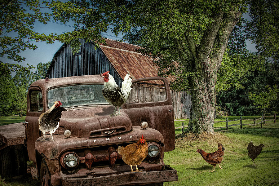 Old Vintage Ford Truck with Free Range Chickens on on a West Mich by Randall Nyhof