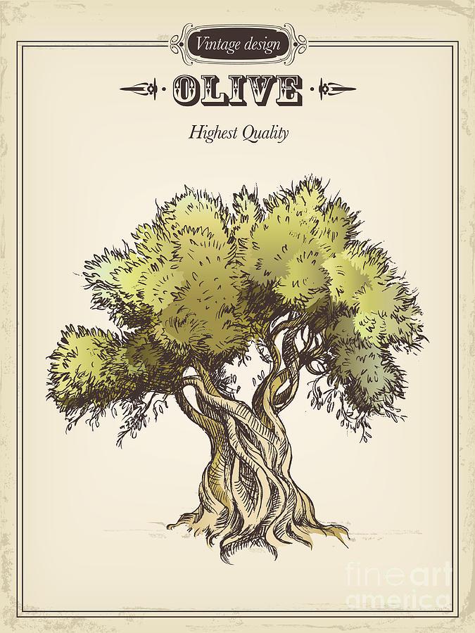 Olive Tree Digital Art by Tatarnikova