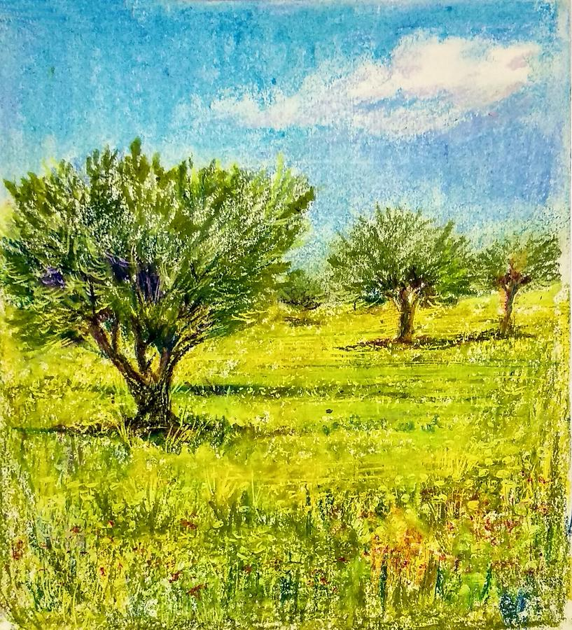 Olive trees by Asha Sudhaker Shenoy