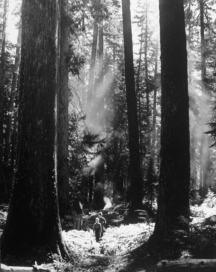 Olympic National Park Showing Rain Fores Photograph by Loomis Dean