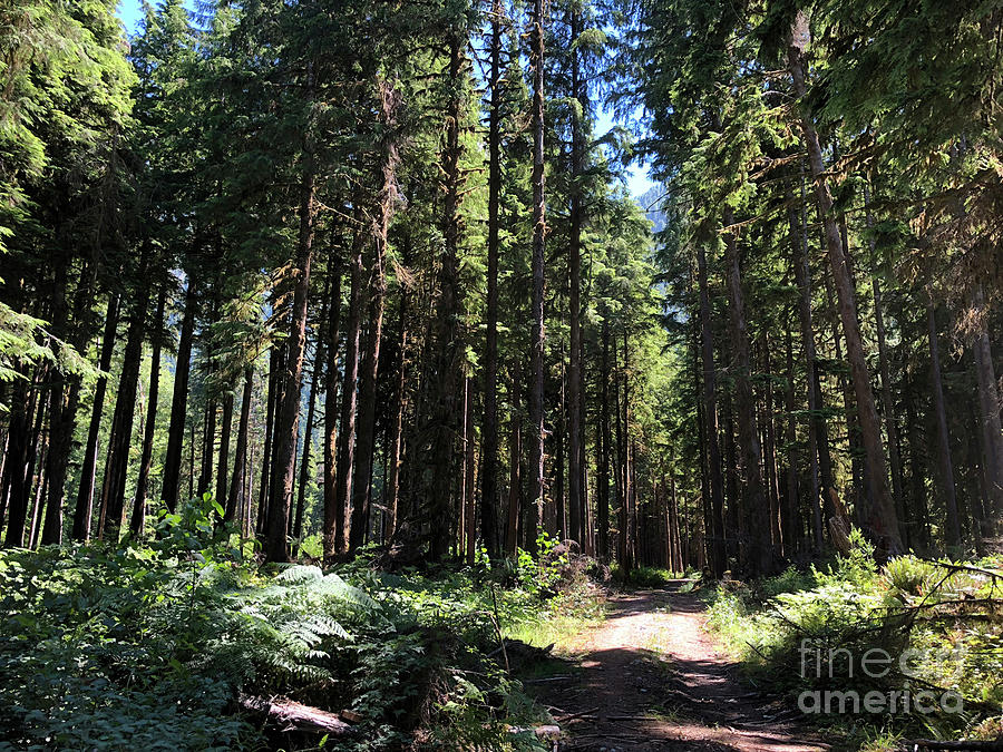Olympic National Rain Forest I by Molly Williams