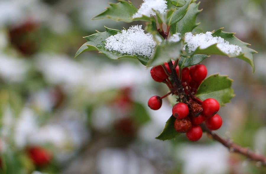 On a Loving Winter's Day by The Art Of Marilyn Ridoutt-Greene