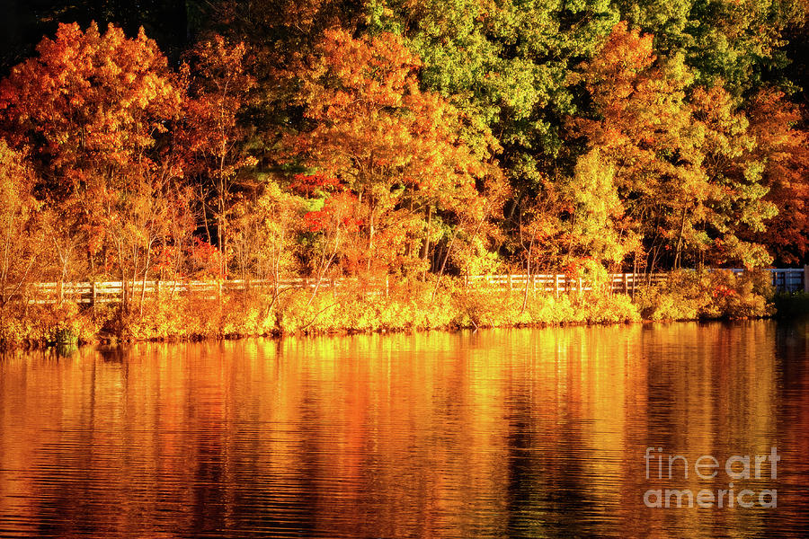 On Golden Pond by Anita Pollak