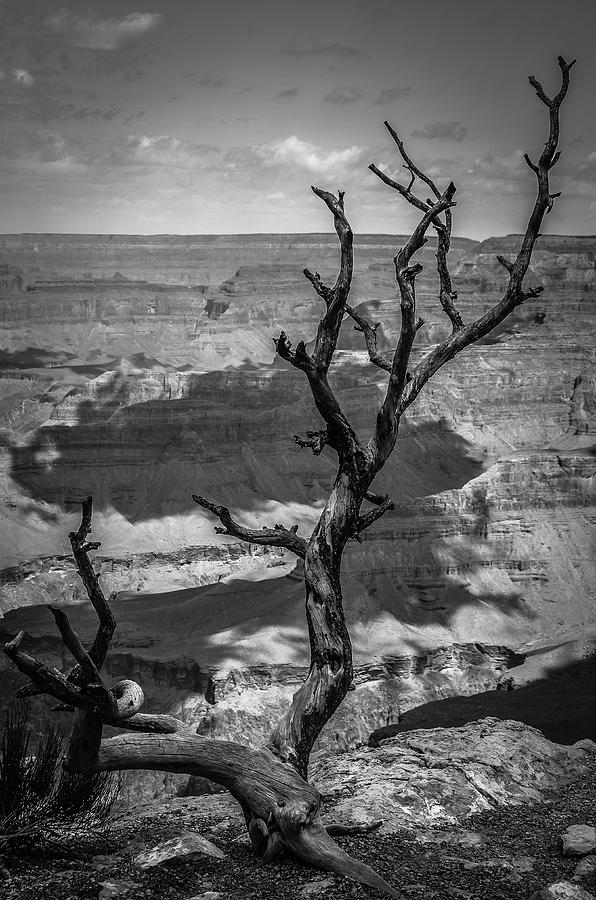 On the edge of the Grand Canyon BW by RicardMN Photography
