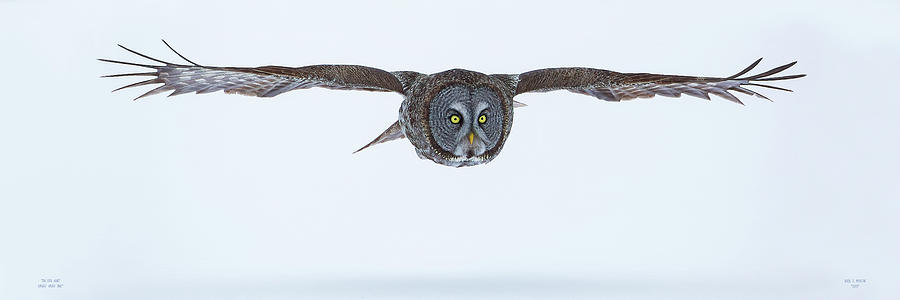 On The Hunt 2 X 6 Pano by Dale J Martin