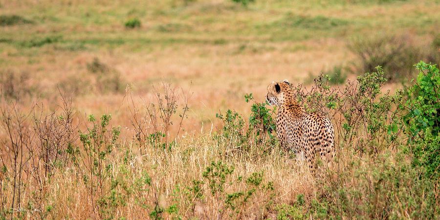 On The Hunt by Joan Davis