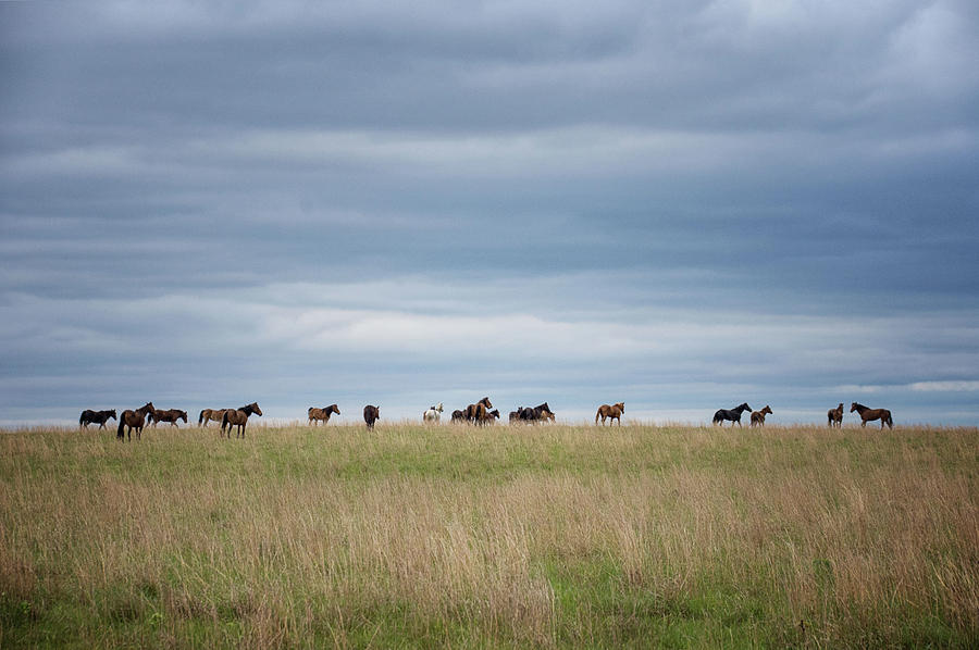 On the Prairie by Jolynn Reed