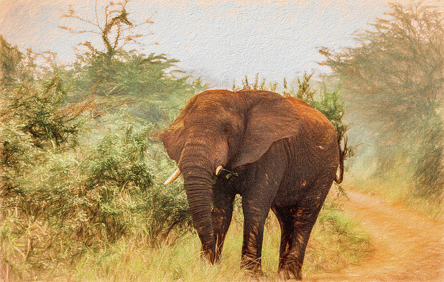 On the Safari Road by Marcy Wielfaert