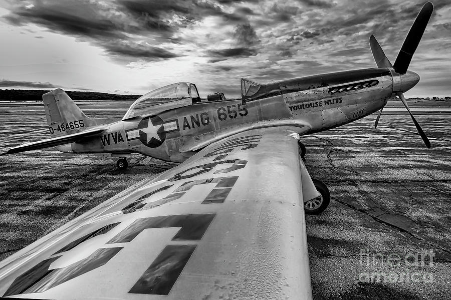 On The Wing  by Joe Geraci