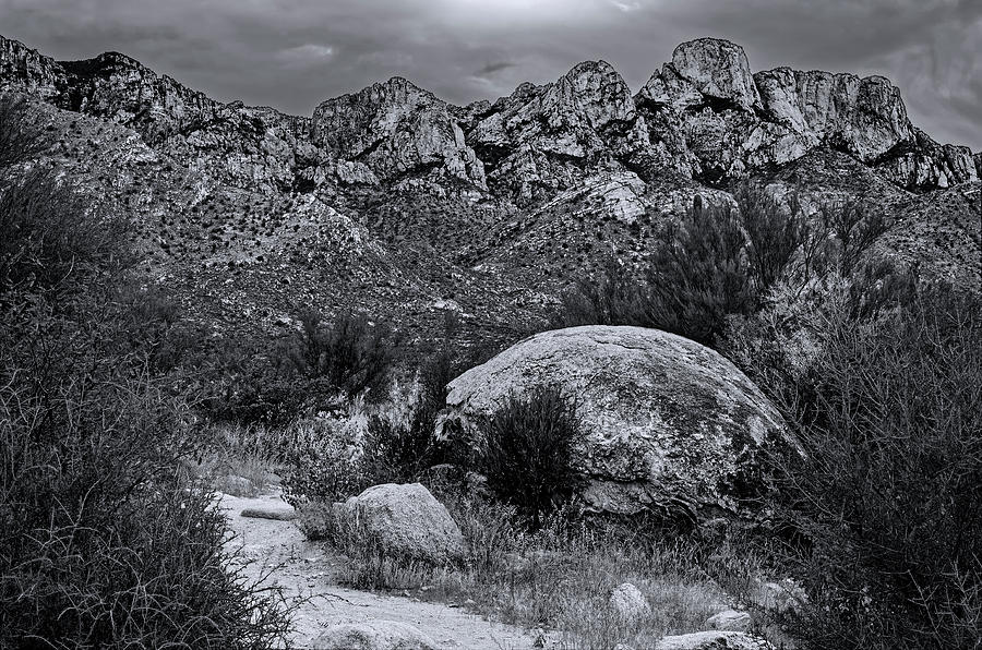 On Trail - Catalinas M1124 Photograph
