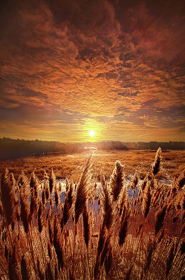 Once Upon A Waking Dream by Phil Koch