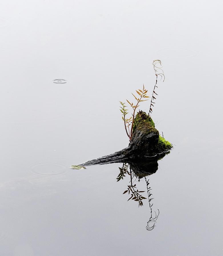 One Drop by Lynn Wohlers