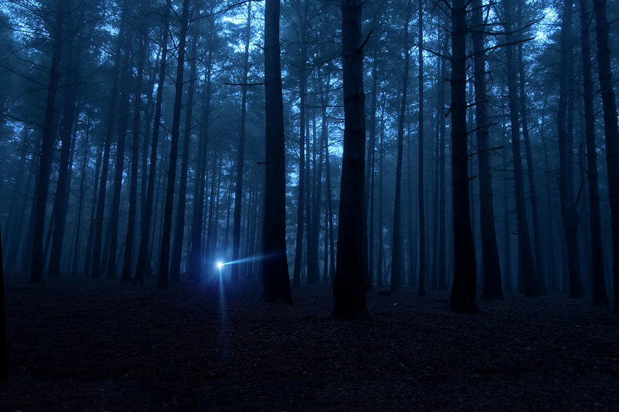 One Light In The Dark Spooky Woods At Photograph by Nkbimages