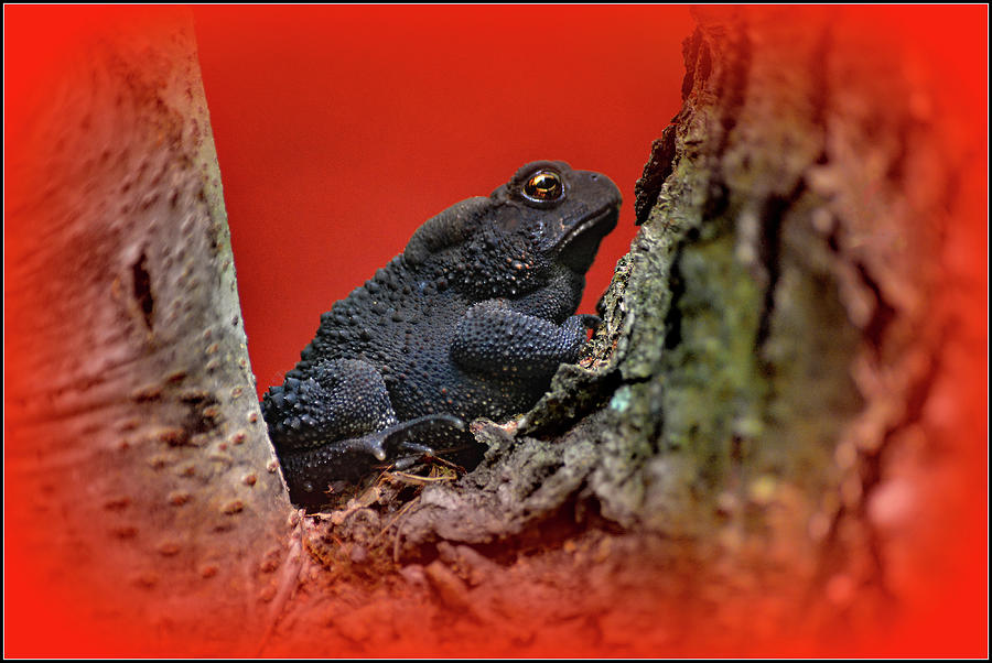 One Little Frog Photograph