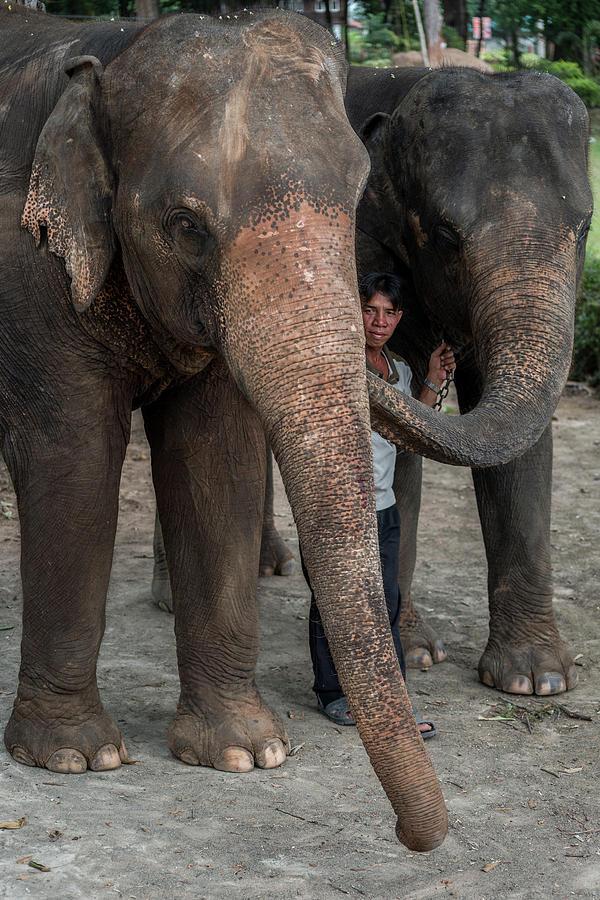 One Man, Two Elephants by Ian Robert Knight