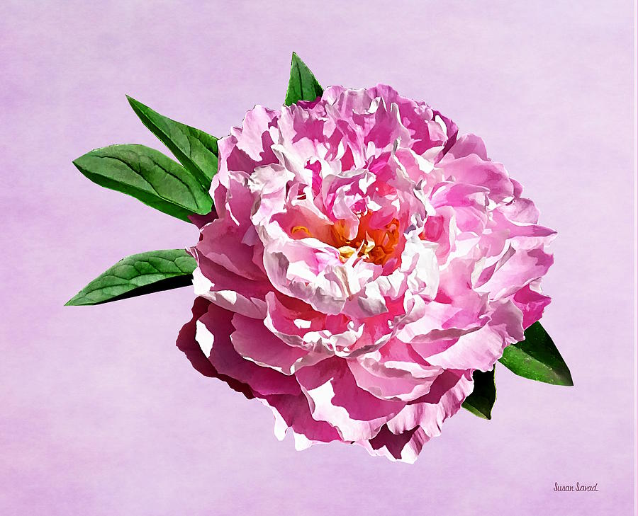 One Pale Pink Peony by Susan Savad
