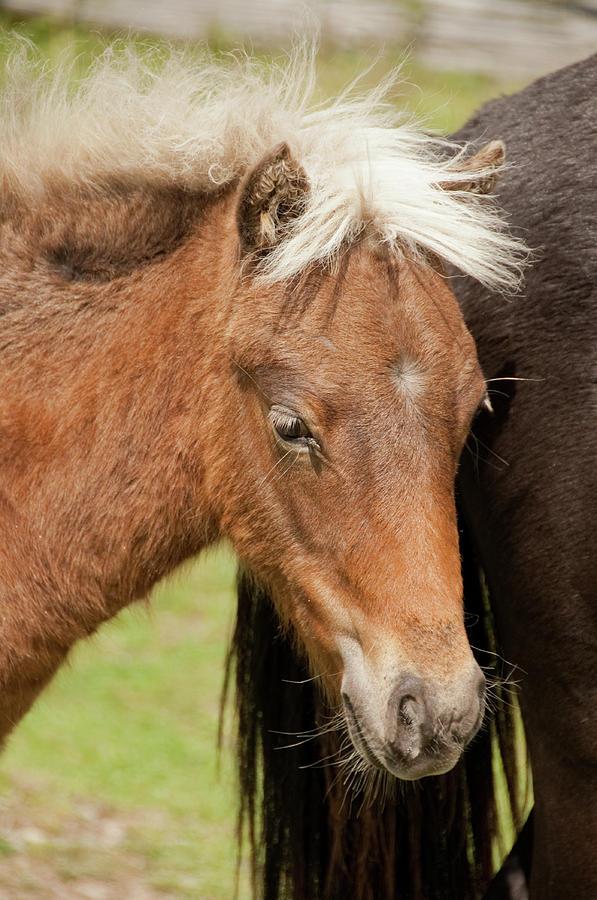 One Pony by Joye Ardyn Durham