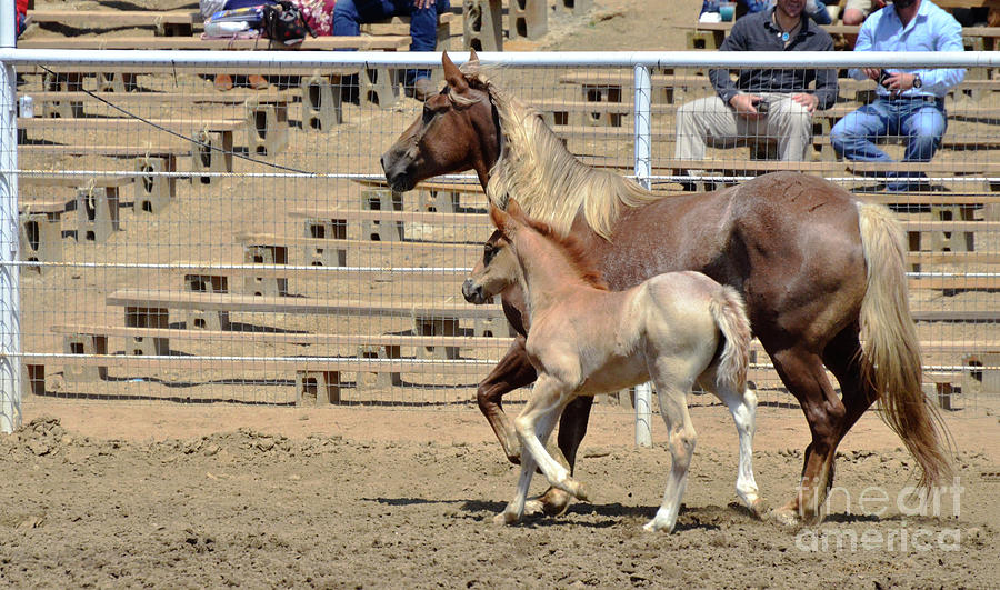 Horse Photograph - One Proud Mama by Debby Pueschel