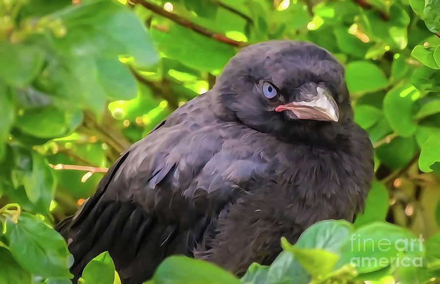 One Serious Crow by Bob Lentz