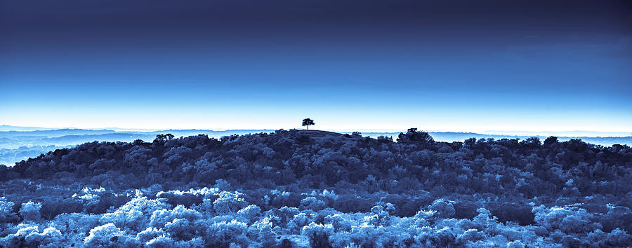 One Tree Hill -Blue -2 by Darryl Dalton