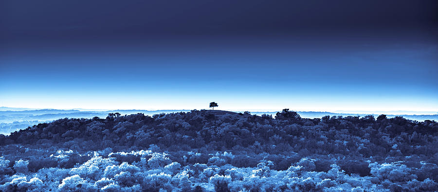 One Tree Hill - Blue - 3 by Darryl Dalton