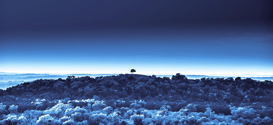 One Tree Hill - Blue 4 by Darryl Dalton