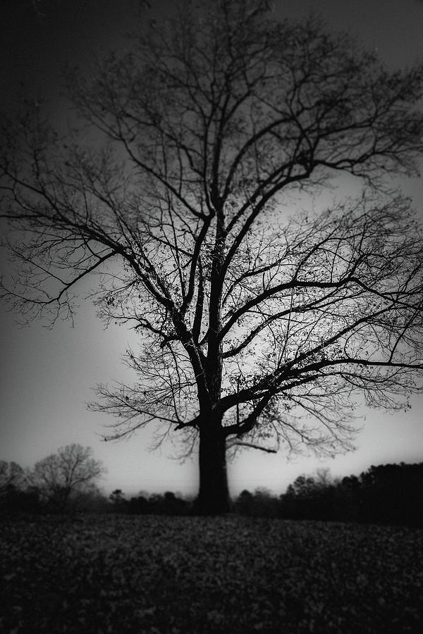 One Tree Silhouette by Doug Camara