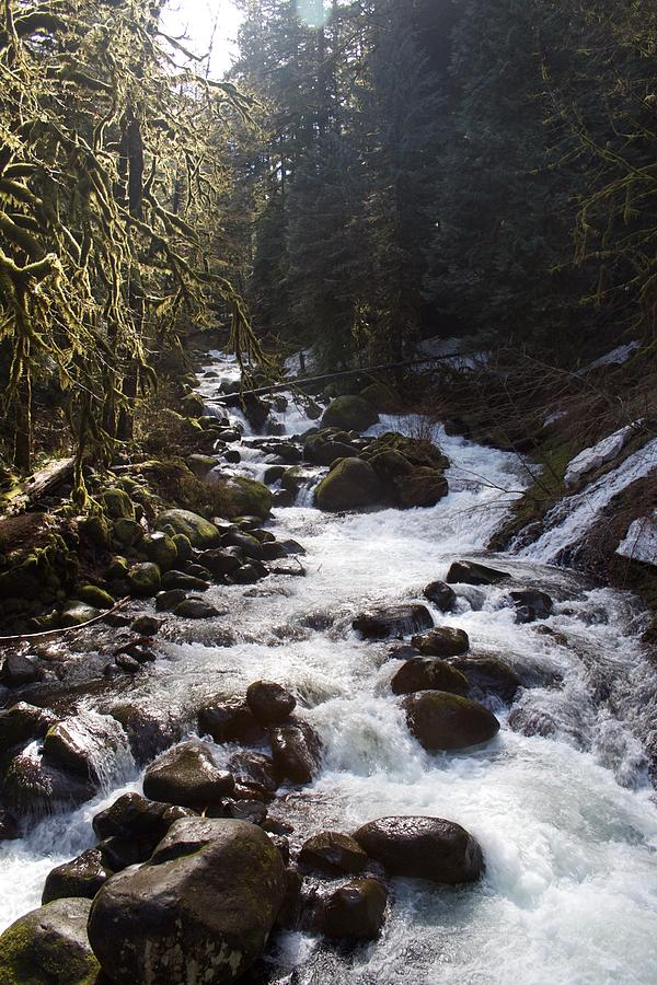 Oneonta Creek by Dylan Punke