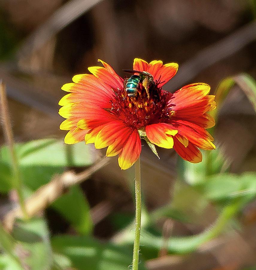 Orange and Yellow Flower by Gene Bollig