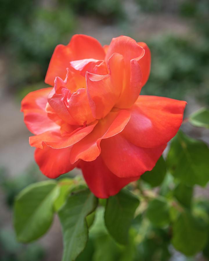 Orange Beauty by TL Wilson Photography by Teresa Wilson