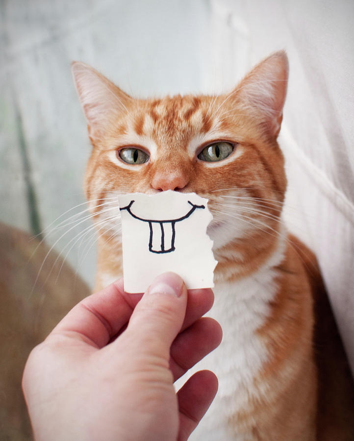 Orange Cat Face Photograph by Jtsiemer