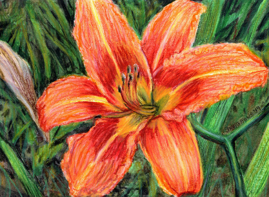Orange Daylily by Shana Rowe Jackson