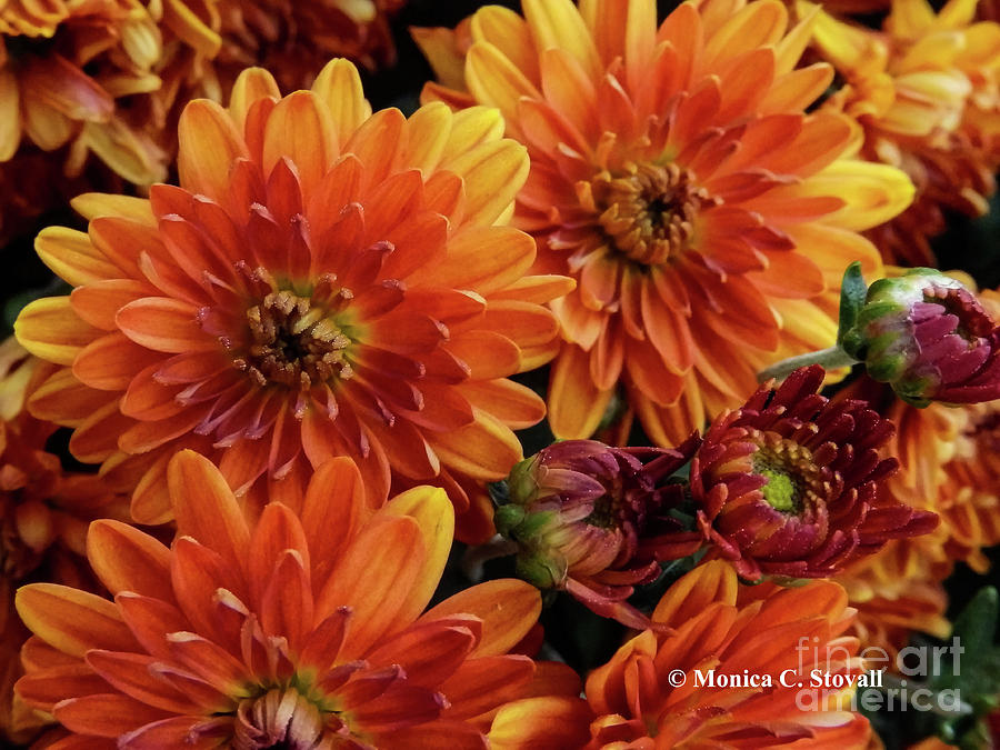 Orange Flowers No. 14 by Monica C Stovall