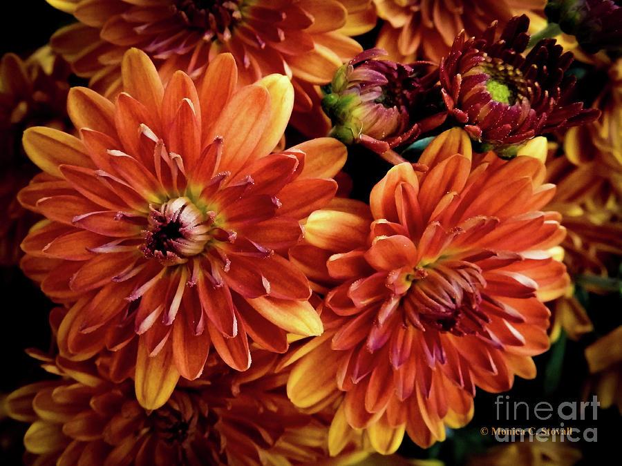 Orange Flowers O12 by Monica C Stovall