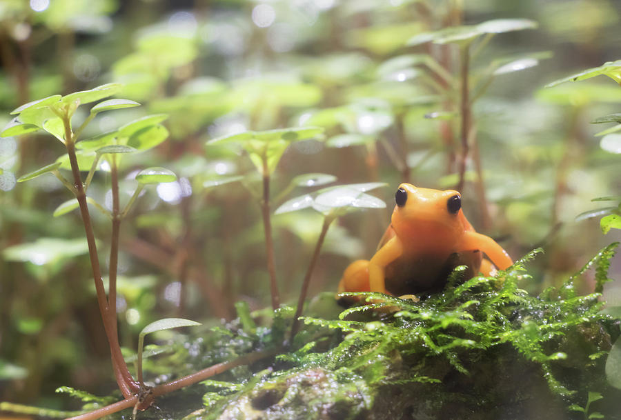 Frog Photograph - Orange Frog. by Anjo Ten Kate