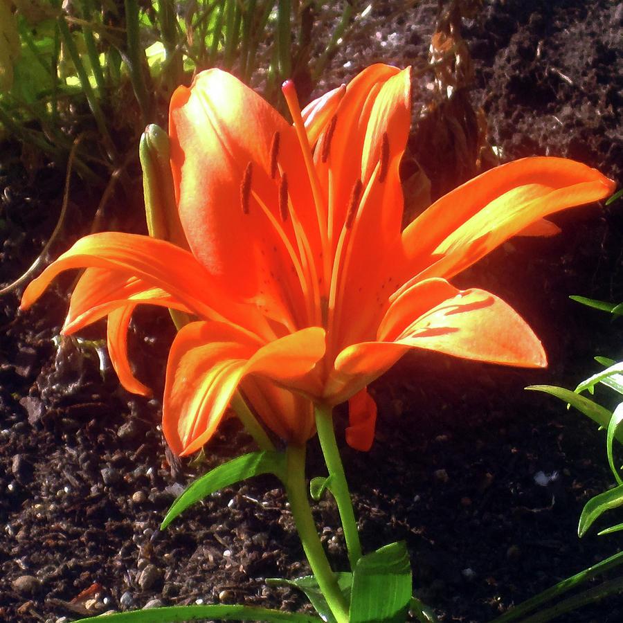 Orange Garden Flower by Jaeda DeWalt