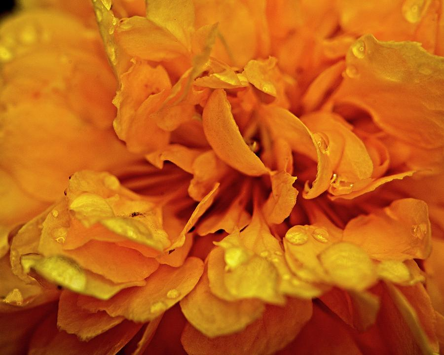 Orange Kist by John Benedict