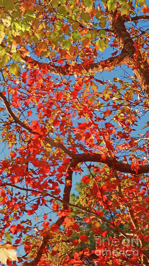 Orange Leaves  by Eunice Warfel