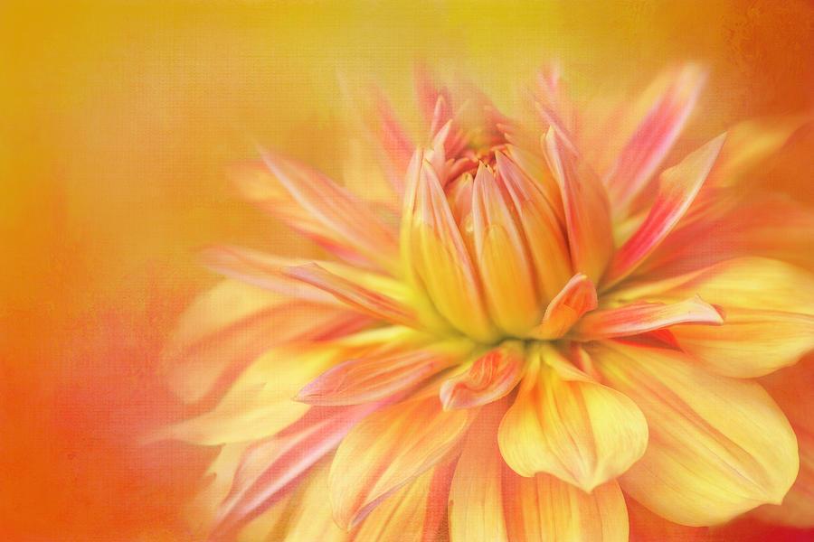 Texture Digital Art - Orange Painted Dahlia by Terry Davis