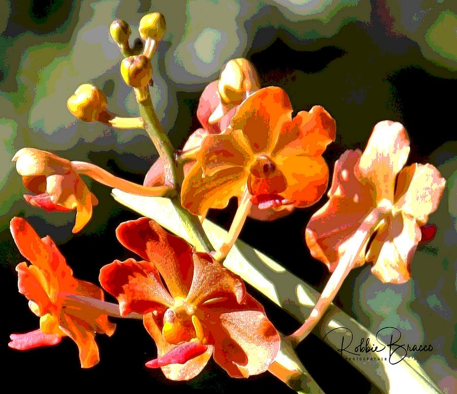 Orange Phalaenopsis Moth Orchids by Philip Bracco