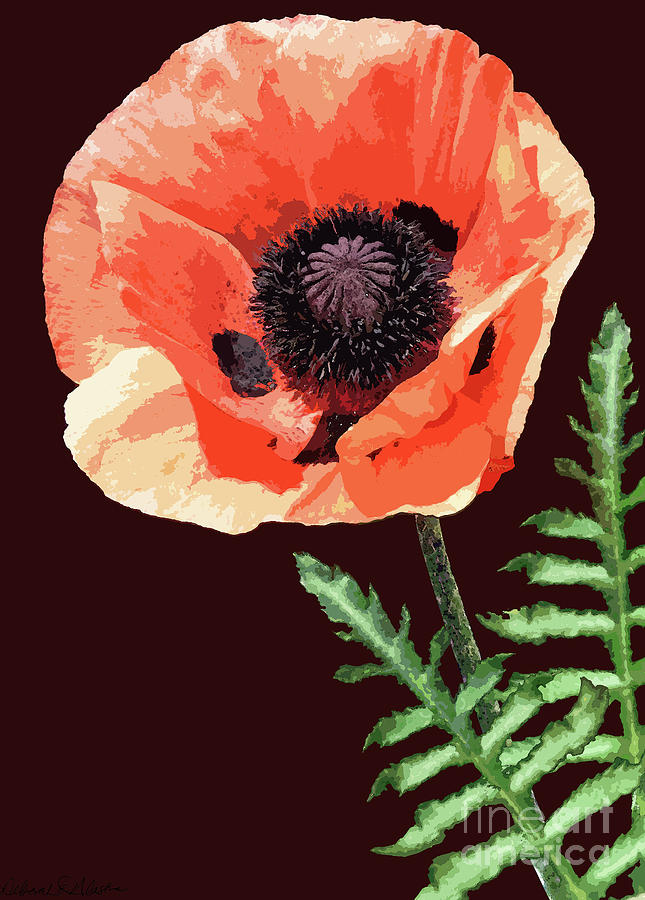 Orange Poppy by Deborah Eve Alastra