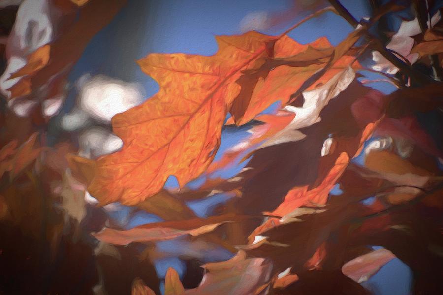 Orange by Renette Coachman